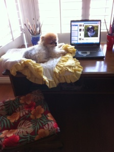 Mango Surfing The Net